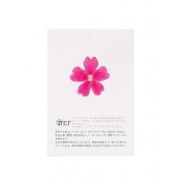 Dried Pink Verbena Edible Flowers