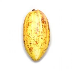 Barre Chocolat Artisanale 72% Tablette de Dong Nai