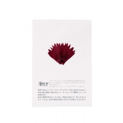 Fleurs séchées Oeillet Violet comestibles