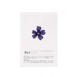 Fleurs séchées de Verveine Bleue  comestibles